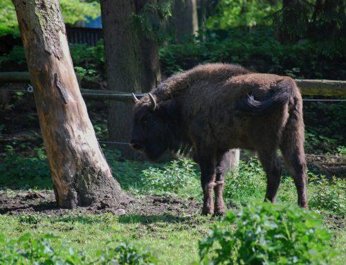 Wildpark Dünnwald