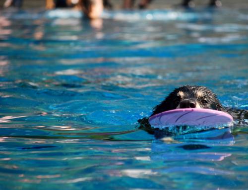 Hundeschwimmen im Stadionbad